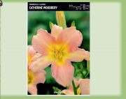 hemerocallis-lily-catherine-woodberry-1-kus-promotion!!!.jpg