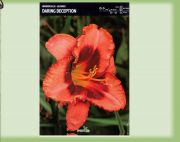 hemerocallis-lily-daring-deception-1-kus.jpg