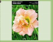 hemerocallis-lily-double-dream-1-kus-promotion!!!.jpg