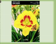 hemerocallis-lily-king-george-1-kus.jpg