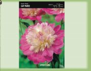 paeonia-pivonka-gay-paree-1-kus-promotion!!!.jpg